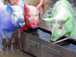 MP expenses pigs - bryce edwards