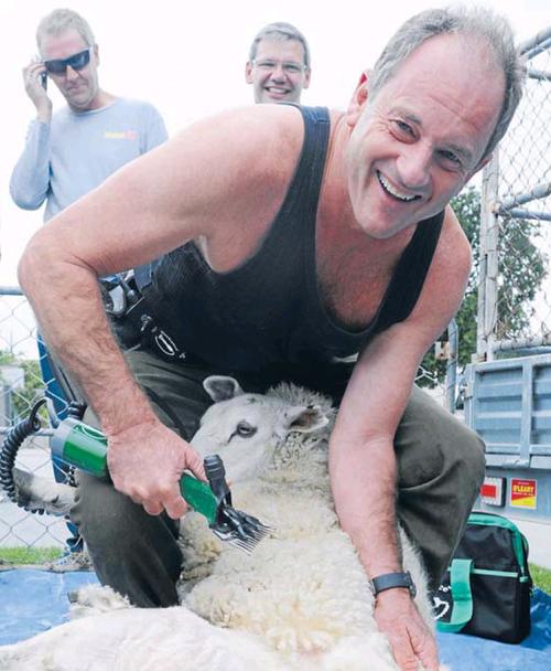 David shearer labour party shearing sheep NZ Politics Daily - Bryce Edwards Otago University liberation blog - www.liberation.org.nz